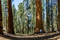 Sequoia-Nat-Park-Photographer-Walt-Mather-1200